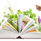 Seznámení s knihovnou – MŠ Ekolandia